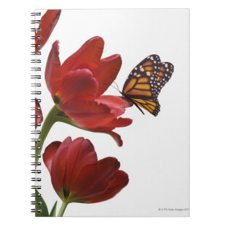 a bouquet of red tulips is visited by a monarch notebook
