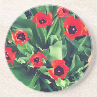 A Bouquet of Tulips in the garden Beverage Coaster