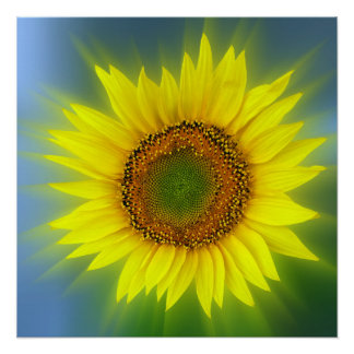 a bright sunflower