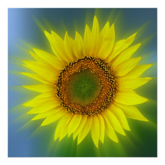 a bright sunflower poster