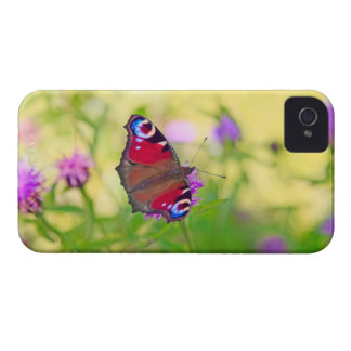 A brightly coloured Peacock butterfly is Case-Mate iPhone 4 Cases