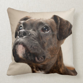 A Brindle Boxer puppy looking up curiously. Cushion