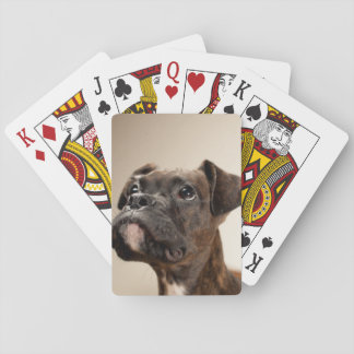 A Brindle Boxer puppy looking up curiously. Poker Deck
