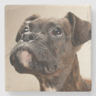 A Brindle Boxer puppy looking up curiously. Stone Coaster