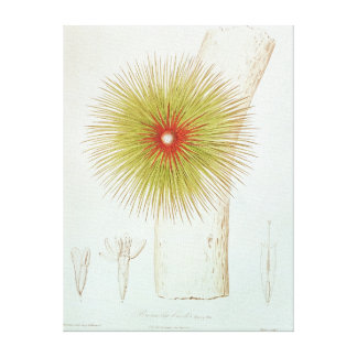 A Bromelia found in the Andes Canvas Print