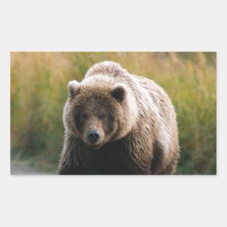 A Brown Bear Walking on a Trail Rectangular Sticker