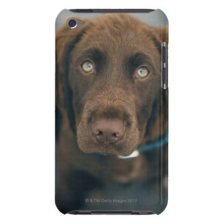 A brown dog. barely there iPod covers