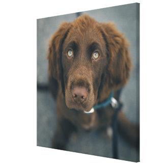 A brown dog. canvas print