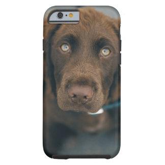 A brown dog. tough iPhone 6 case