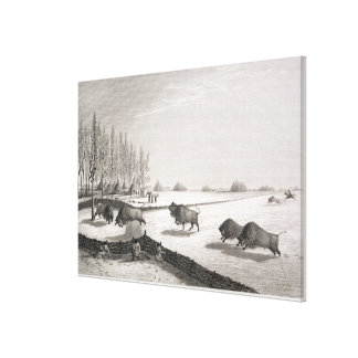 A Buffalo Pound, from 'Narrative of a Journey to t Canvas Print