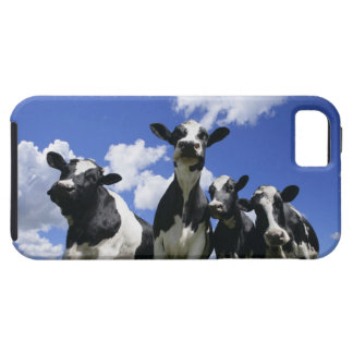 A bugs eye view of four young calves iPhone 5 cover