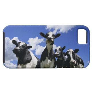A bugs eye view of four young calves tough iPhone 5 case