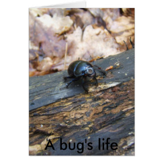 A bug's life note card