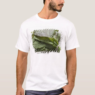 A bunch of fresh mustard greens, from a farmer's T-Shirt
