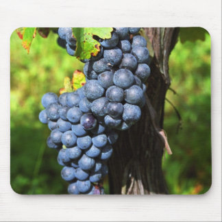 A bunch of grapes ripe merlot on a vine with mouse mat