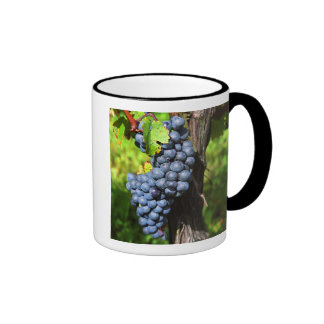 A bunch of grapes ripe merlot on a vine with ringer mug