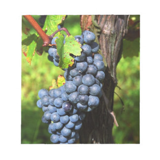 A bunch of grapes ripe merlot on a vine with notepad