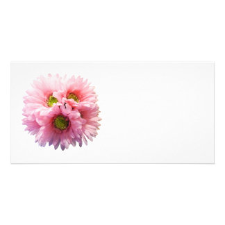 A Bunch of Pink Daisies Custom Photo Card