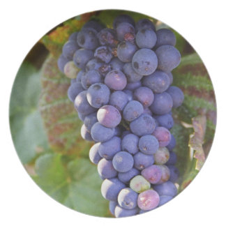 A bunch of Pinot Noir grapes in a Chambertin Plate