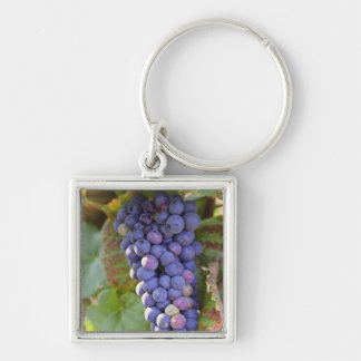 A bunch of Pinot Noir grapes in a Chambertin Silver-Colored Square Key Ring