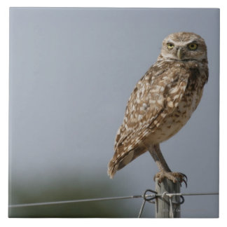 A burrowing owl sitting on a fence post. Taken Large Square Tile