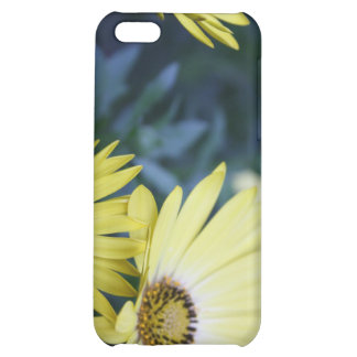 A Burst of Yellow African Daisies Case iPhone 5C Case