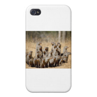 A Business of Mongoose Cover For iPhone 4