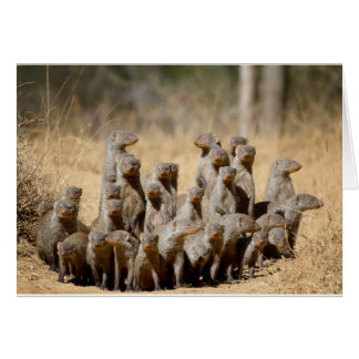 A Business of Mongoose Greeting Card