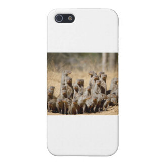 A Business of Mongoose Covers For iPhone 5