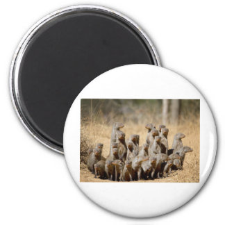 A Business of Mongoose Refrigerator Magnets