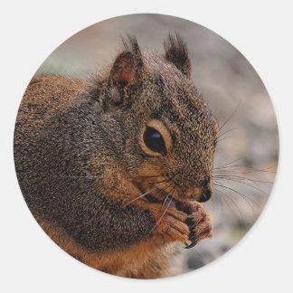 A Busy Douglas Squirrelel Round Sticker