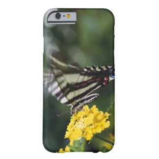 A butterfly, in the family of Swallowtails or Barely There iPhone 6 Case