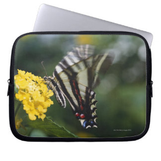 A butterfly, in the family of Swallowtails or Laptop Sleeve
