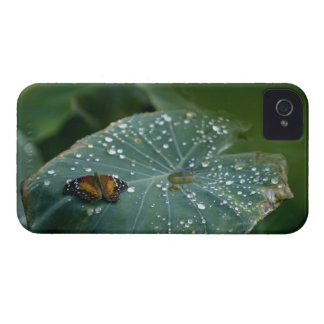 A Butterfly on a leaf with water droplets iPhone 4 Case-Mate Case