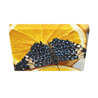 A Butterfly On A Sliced Orange Stretched Canvas Print