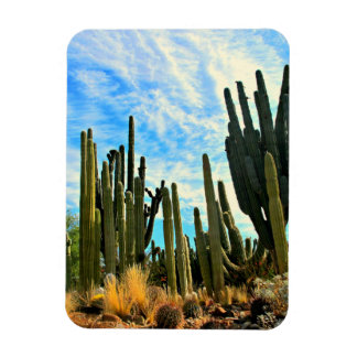 A Cacti Farm Large Photo Magnet Rectangle Magnets