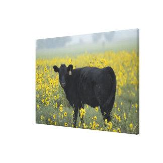 A calf amid the sunflowers of the Nebraska Canvas Print