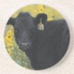 A calf amid the sunflowers of the Nebraska Drink Coasters