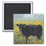 A calf amid the sunflowers of the Nebraska Square Magnet