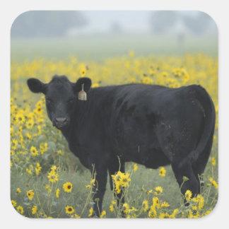 A calf amid the sunflowers of the Nebraska Square Sticker
