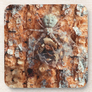 A Camouflaged Bark Spider Coaster