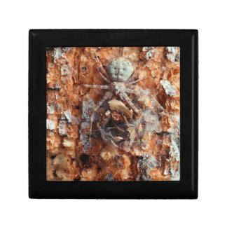 A Camouflaged Bark Spider Gift Box