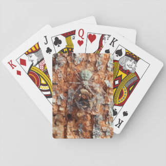 A Camouflaged Bark Spider Playing Cards