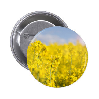 A canola field in spring 6 cm round badge