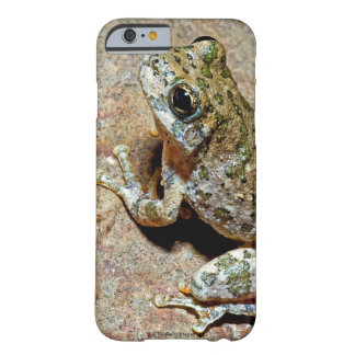 A Canyon Treefrog Barely There iPhone 6 Case