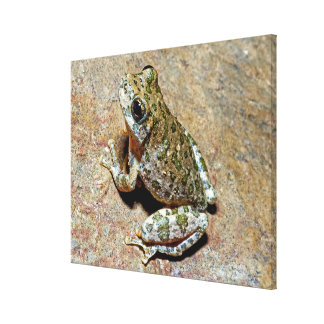 A Canyon Treefrog Canvas Print
