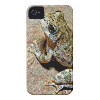 A Canyon Treefrog iPhone 4 Covers