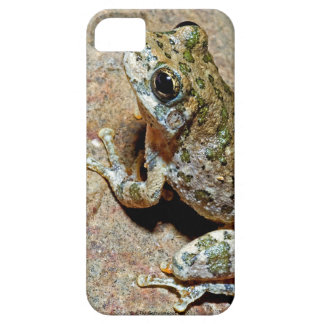 A Canyon Treefrog iPhone 5 Case