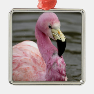 A captive photo of a Andean Flamingo Christmas Ornament