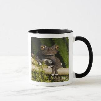 A captive Tapichalaca Tree Frog (Hyloscirtus Mug